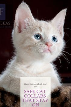 Safe Cat Collars That Stay On - Better Cat Care Tips For A Purr friend. Break Away Cat collars are probably the best option for… Cat Care Tips, Pet Care, Tick Removal Dog, Dog Rash, Operant Conditioning, Cat Skin, Cat Info, Cats Bus, Cat Boarding