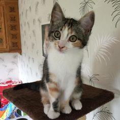 Skorpan på bushumör  #skorpan #bus #kattunge #huskatt #sötnöt #cutie #kitten #cat #catsofinstagram #cats_of_instagram #catoftheday #catslife #catlovers #catsofworld #cats #playtime #sköldpaddsfärgad by hilmasusanne http://www.australiaunwrapped.com/