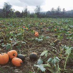 によるInstagramの写真ficklekitten - . Pumpkin! Pumpkin!! Pumpkin!!! . . 辺り一面はパンプキン畑 . .