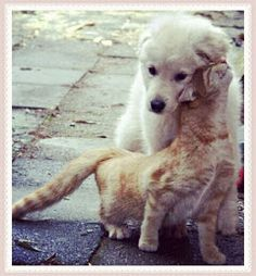 Funny Animal Pictures - View our collection of cute and funny pet videos and pics. New funny animal pictures and videos submitted daily. Animals And Pets, Baby Animals, Funny Animals, Cute Animals, Funny Cats, Cute Kittens, Cats And Kittens, I Love Cats, Dog Love