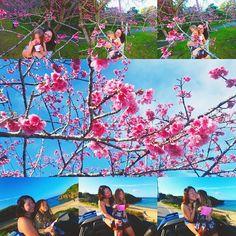 【sachi_moana】さんのInstagramをピンしています。 《#okinawajapan #okinawa #yaedake#island #cherryblossom #festival #daughter #mom#beach #沖縄#八重岳#人生好きに生きる#人生そんな長くない#娘が喜んでくれたらそれで良い#桜#桜祭り#🌸》