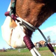 Bitless Horse Bridle - Indian Bosal Combo Bitless Bridle With Reins...