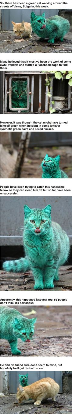 This Cat Accidentally Turned Himself Turquoise And It's Actually Really Pretty :)