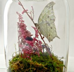 Butterfly Terrarium Kit, Glass Display with Real Butterfly, Home Decor, Specimen Collection