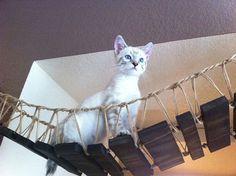 Cat bridge.. indiana jones cat bridge by CatastrophiCreations, $150.00.... If I ever get a cat