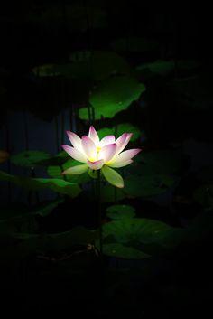 早起きはなんとか…  私にしては珍しく 今回の京都旅は早起きできました☆ これがご褒美のようです!(^^)!