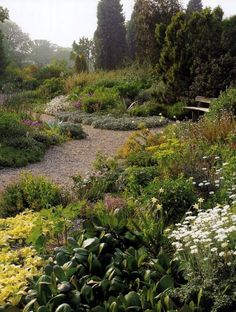 A excellent blog post about Beth Chatto's gravel garden