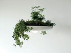 Grünpflanzen Bilder kronleuchter blumentopf design