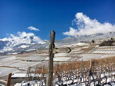 Image de Swiss Wine Promotion Bio, Oeuvre D'art, Promotion, Mountains, Nature, Travel, Image, Grape Vines, Switzerland