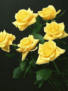 flower animation images - Pesquisa Google