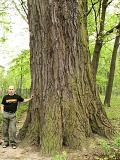 Atlas drzew i krzewów