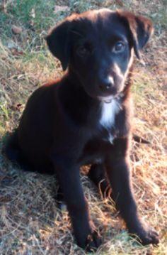 Meleek Adopted 10/19/13