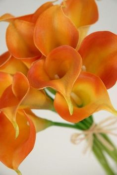 Real Touch Orange Calla lily flower bouquet / 12 flowers each/ 3 for 18 each Beautiful Flowers Garden, Exotic Flowers, Orange Flowers, Amazing Flowers, Pretty Flowers, Lys Calla, Calla Lily Bridal Bouquet, Zantedeschia, Wedding Flowers