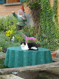 Katze mit Zwerg