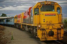 Ride TranzAlpine Express, New Zealand - Bucket List Dream from TripBucket
