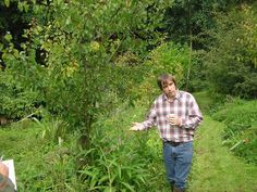 Temperate Climate Permaculture: Using Succession in Permaculture