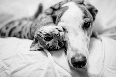 Ami comme chien et chat 1