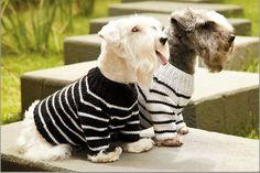 50 Melhores Ideias de Roupa de Cachorro de Crochê com Gráficos