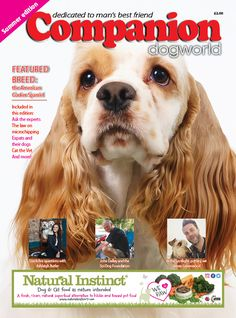The Companion #summer edition is coming soon! Keep an eye on http://www.dogworld.co.uk/section.php/5/1/companion for more information! #dogs #AmericanCocker #pets