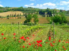 ~ Kitchen Capers ~   Cooking tours in Tuscany