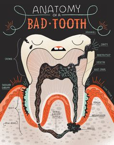 Art by Rachel Ignotofsky | Need your trusted Cary dentist to take care of any bad teeth? Visit our website at http://www.beaversdentistry.com for more information