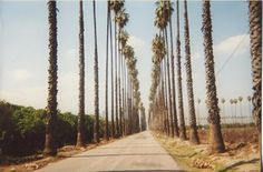 Historical Picture Of Olive Ave Redlands California