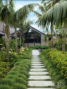 The path leading to the house is lined with mondo grass, a hedge of Gardenia 'Veitchii' and kentia palms