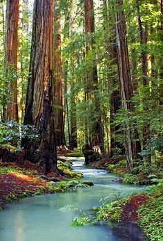 Redwood Stream, Mendocino County, California