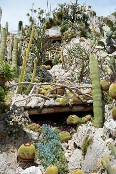 Cacti paradise by Juergen Teller.