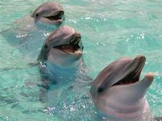 Bottlenose Dolphin Smiles
