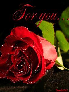 gif animated gif animation beautiful beauty flowers rose mobile animation for mobile for mobile анимация
