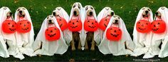 funny dogs in costume fur babies facebook timeline cover for Halloween October