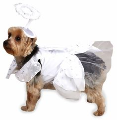 Casual Canine Angel Paws Costume.  Size Medium.  Would be SO perfect for my Peke-Pom to do her Pet Therapy In!!!!