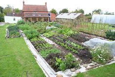 Here I show you highly productive ways to grow food, to enjoy harvests over long periods, and a lovely way of caring for soil - NO DIG, based on my experience of growing acclaimed vegetables without soil tillage for thirty years.