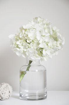 A single hydrangea sprig in a glass vase