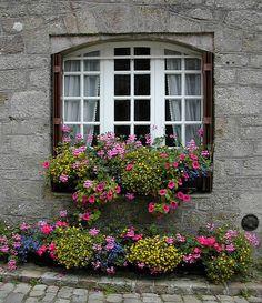 Love the ground plants match the window box. Cottage Windows, Garden Windows, Balcony Garden, Window Box Flowers, Window Boxes, Flower Boxes, Exotic Flowers, Beautiful Flowers, Window View