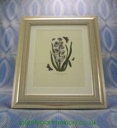 Portmeirion Botanic Garden Framed Genuine Print Hyacinth