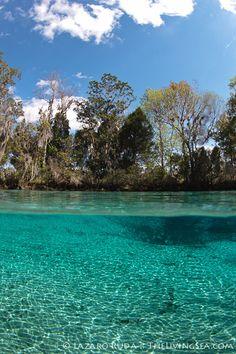 Three Sisters springs, Crystal River, Florida, USA