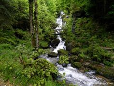 Lagos y cascadas, Selva Negra, Alemania Magic Forest, Waterfall, Outdoor, Lakes, Home, Stone Stairs, Firs, Black Forest, Trekking