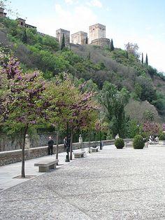 Lusg Vegetation Lines Plaza Nueva - Granada