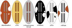 The Zulu regiments - Zulu Total War Military Units, Military Art, Military History, Colonial, Zulu Warrior, Early Modern Period, War Image, Total War, African History