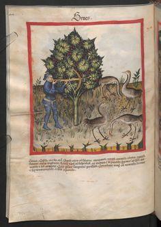 Folio 70v (page 144). Tacuinum sanitatis, Codex Vindobonensis, series nova 2644. Northern Italy, probably Verona, 1380-1399.