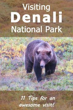 Visiting Denali National Park - 11 Tips for an Awesome Visit Our Denali National Park Trip Report (And 11 tips that will help make sure your visit to Denali will be just as awesome! North To Alaska, Visit Alaska, Alaska Travel, Travel Usa, Alaska Trip, Cruise Travel, Alaska National Parks, Denali National Park Tours, Alaska The Last Frontier