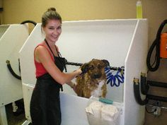 Dog wash station dog parks pinterest dog here are some tips on how to start a self serve dog washing business solutioingenieria Gallery