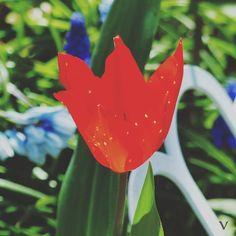 FARBE... ist was fehlt  #Garten #Gartenliebe #tulpen #tulpe #tulpenliebe #tulips #tulip #blackandwhitephotography #tulpenzeit #tulipa #bloom #blooms #Gartenglück #Gartenzeit #Gartenträume #Gärten #Blume #Blumen #Blumenliebe #Blumenfotografie #blumenzauber #nature  #naturelover  #naturephotography  #flowers #flower #naturesbeauty  #naturelove  #PictureoftheDay  #Photooftheday