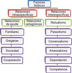 relaciones intraespecificas - Buscar con Google