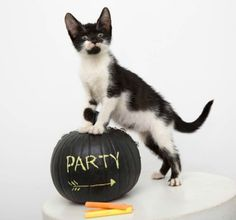 17 No-Carve Ways to Decorate Your Pumpkins - Woman's Day