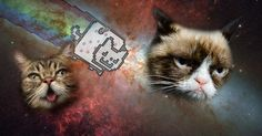The Complete Hiss-tory of Cats on the Internet