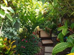 tropical garden canopy plants - Google Search