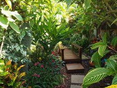 tropical garden canopy plants - Google Search